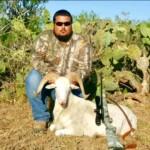 Texas Dall Ram