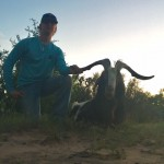 Catalina Goat