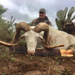 Texas Dall Ram Bison Meat Hunt Buffalo Hunting South Texas Tatonka Burgers Axis Deer Fallow Nilgai Blackbuck Antelope Rams Catalina Goats