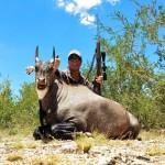 Nilgai bull hunt