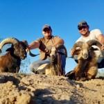 Corsican ram hunts