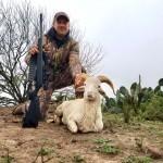Texas Dall Ram hunt