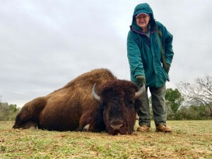 American bison hunt