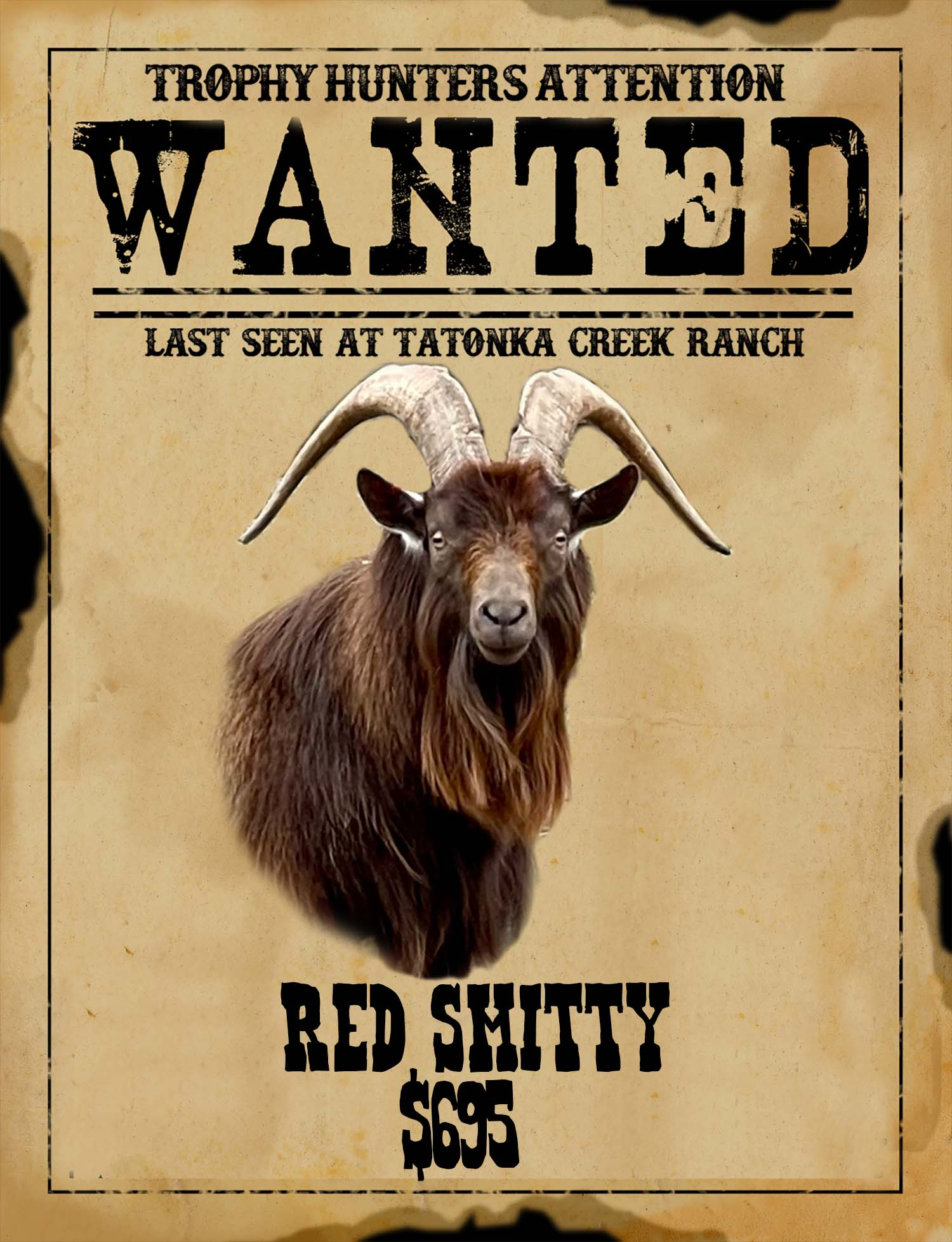 trophy catalina goat hunt in south Texas