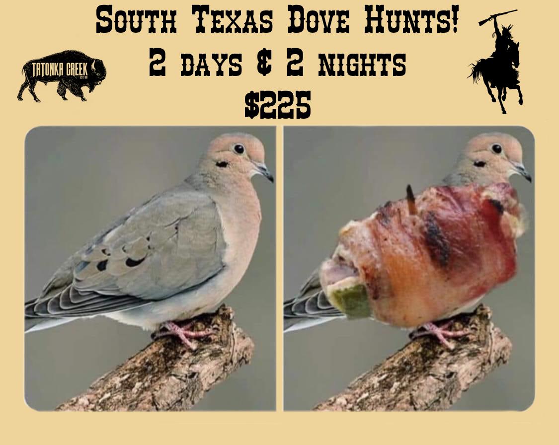 dove hunting in benavides Texas